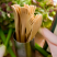 Compostable Wooden Forks