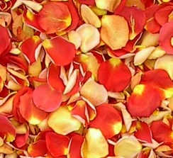 Freeze Dried Two-Tone Rose Petals - 8 Cups